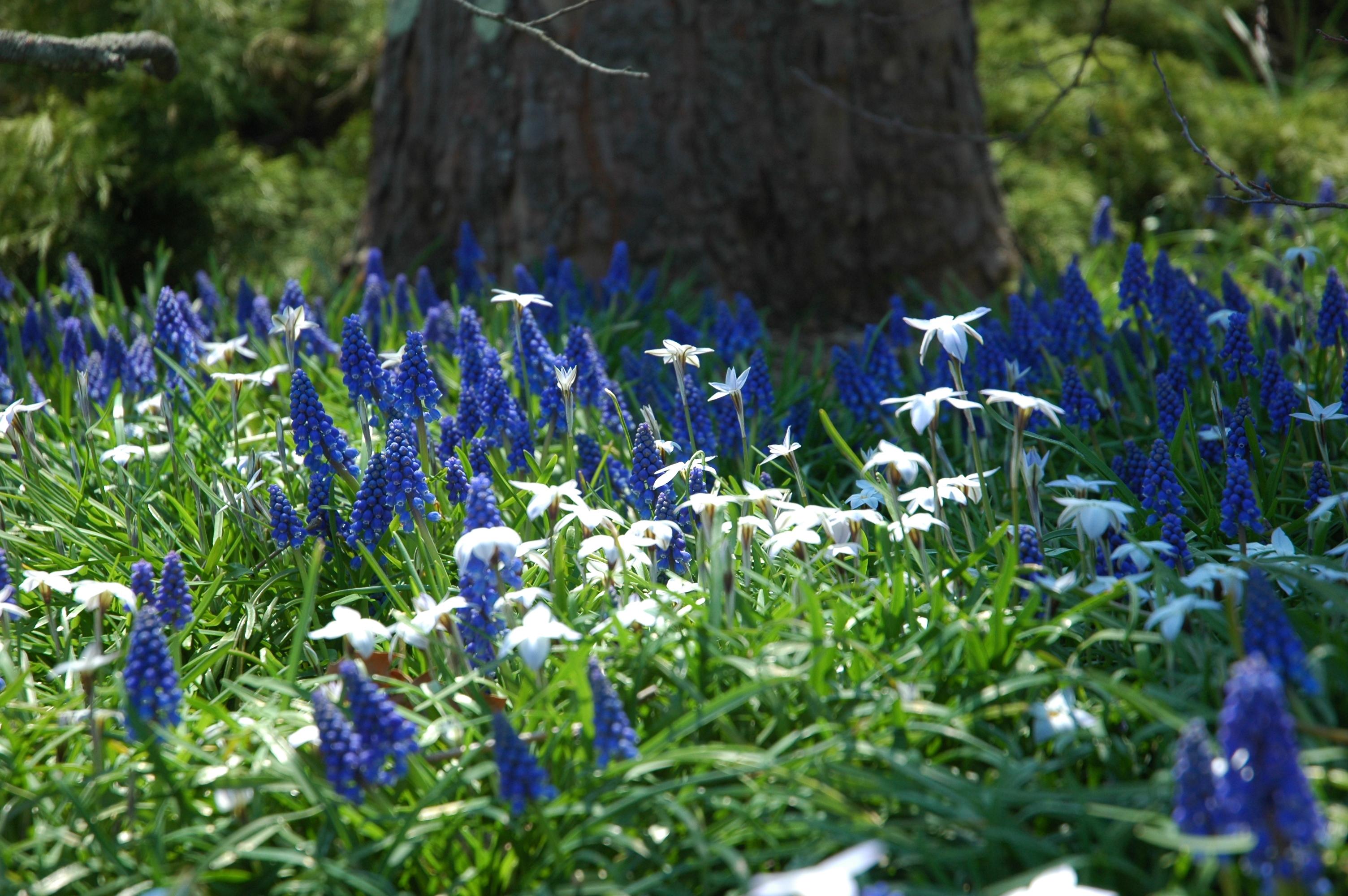 Early Spring Flowers Auntie Dogmas Garden Spot