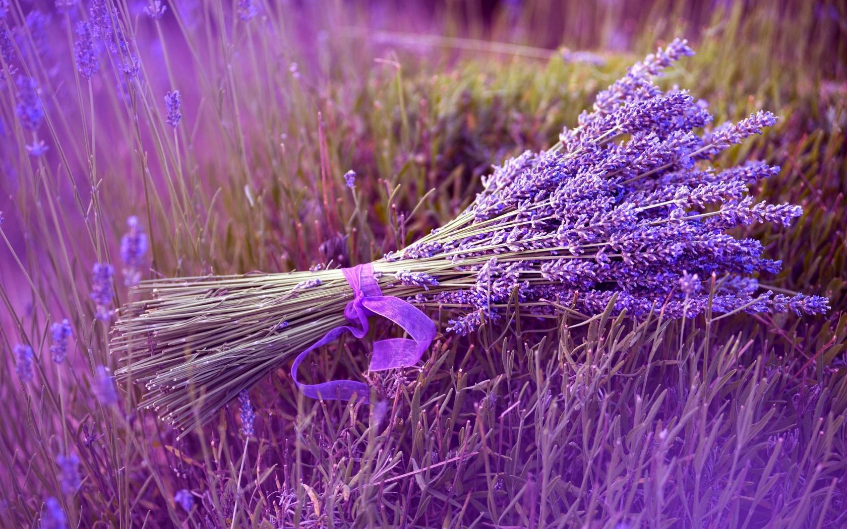 Image result for lavender images