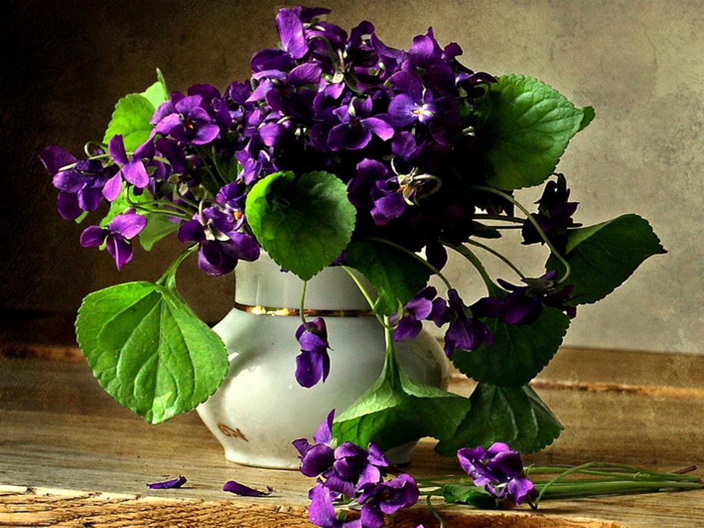 Window Herb Gardens Wild Violets Auntie Dogma S Garden Spot