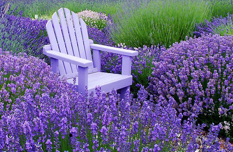 Aromatherapy ~ Stress & Relaxation Blend | Auntie Dogma's ...  Aromatherapy ~ ...