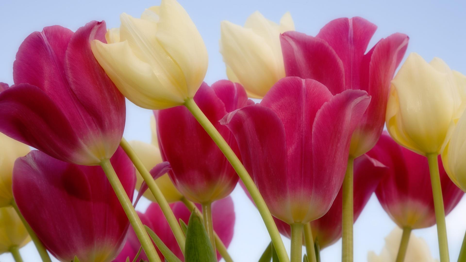 Window Herb Gardens Tulips Auntie Dogma S Garden Spot