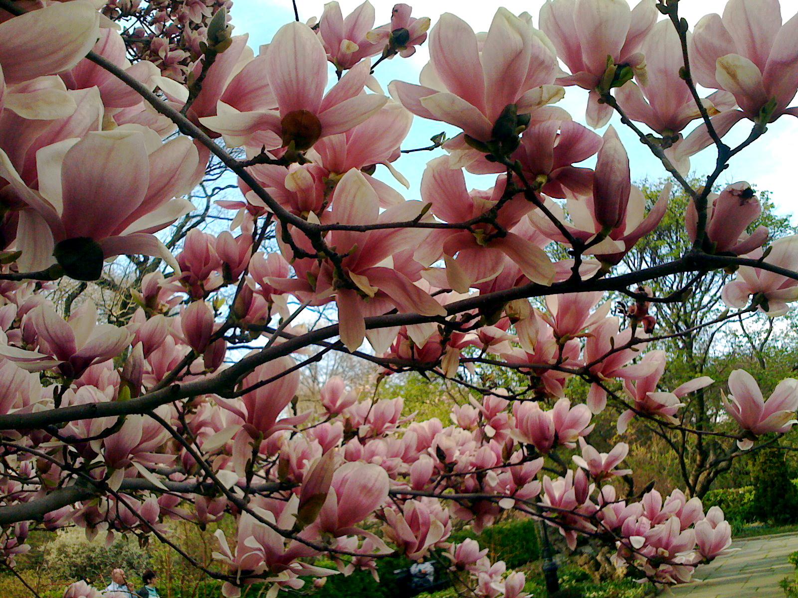 Flowering Treesbushes Auntie Dogmas Garden Spot