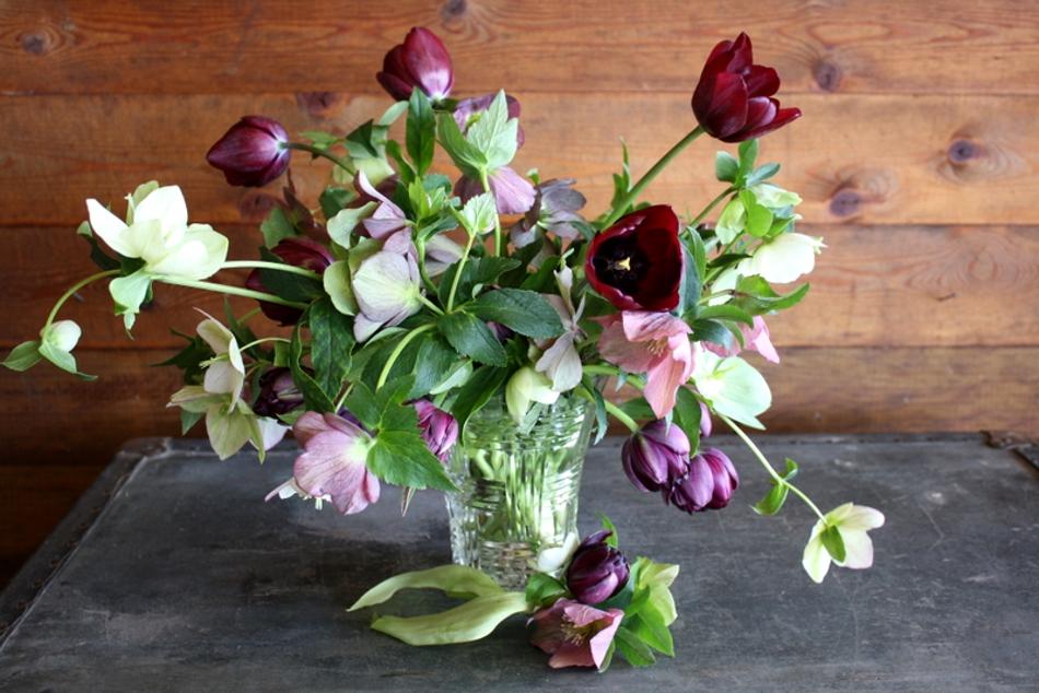 Tulips Auntie Dogmas Garden Spot
