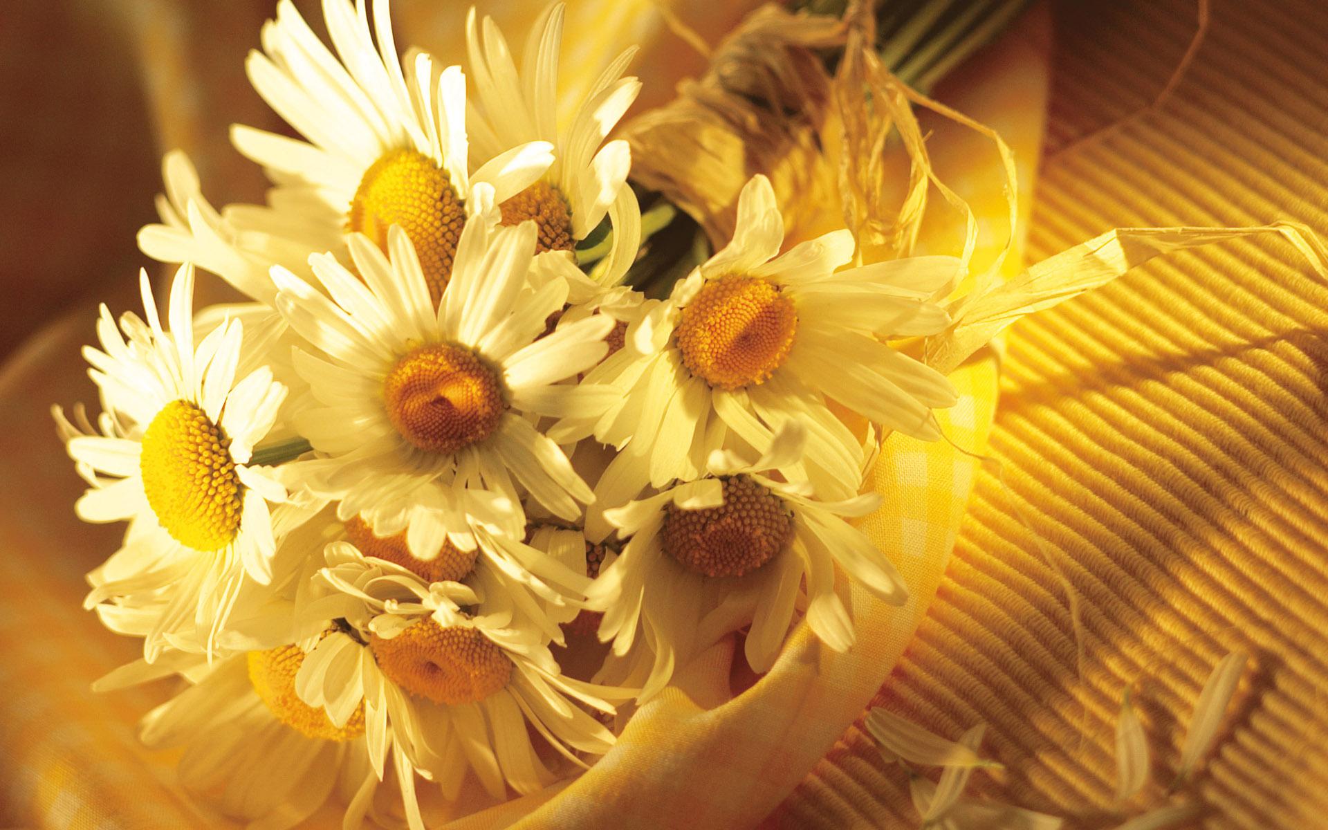 Shasta daisies aprils birth flower of the month auntie dogmas bouquet of daises izmirmasajfo