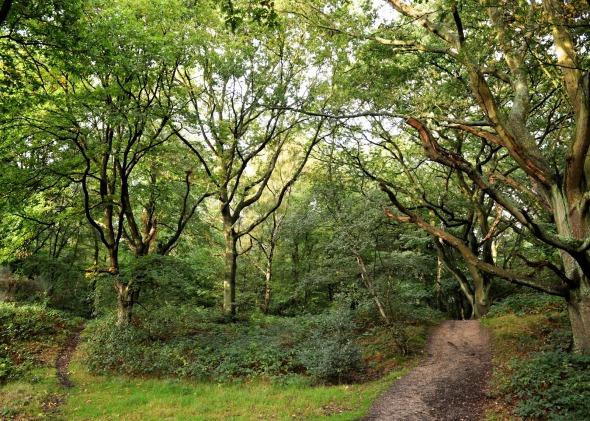 laurel woods