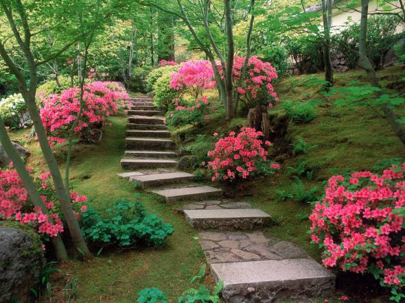 azaleas_japanese_garden-normal
