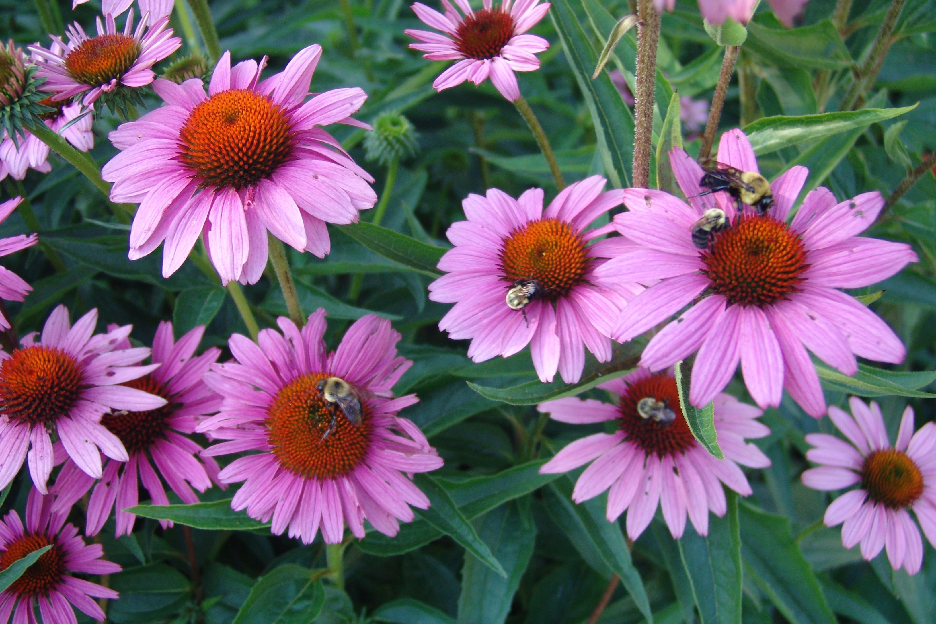 Комнатные растения: фото с названиями. Фотографии 36