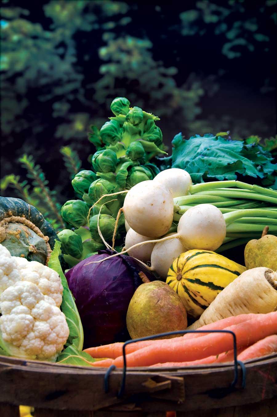 gardeners in southern hemisphere preparing your vegetable garden