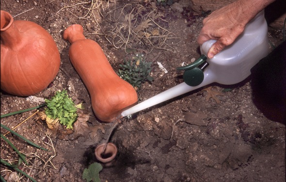 ollas irrigation