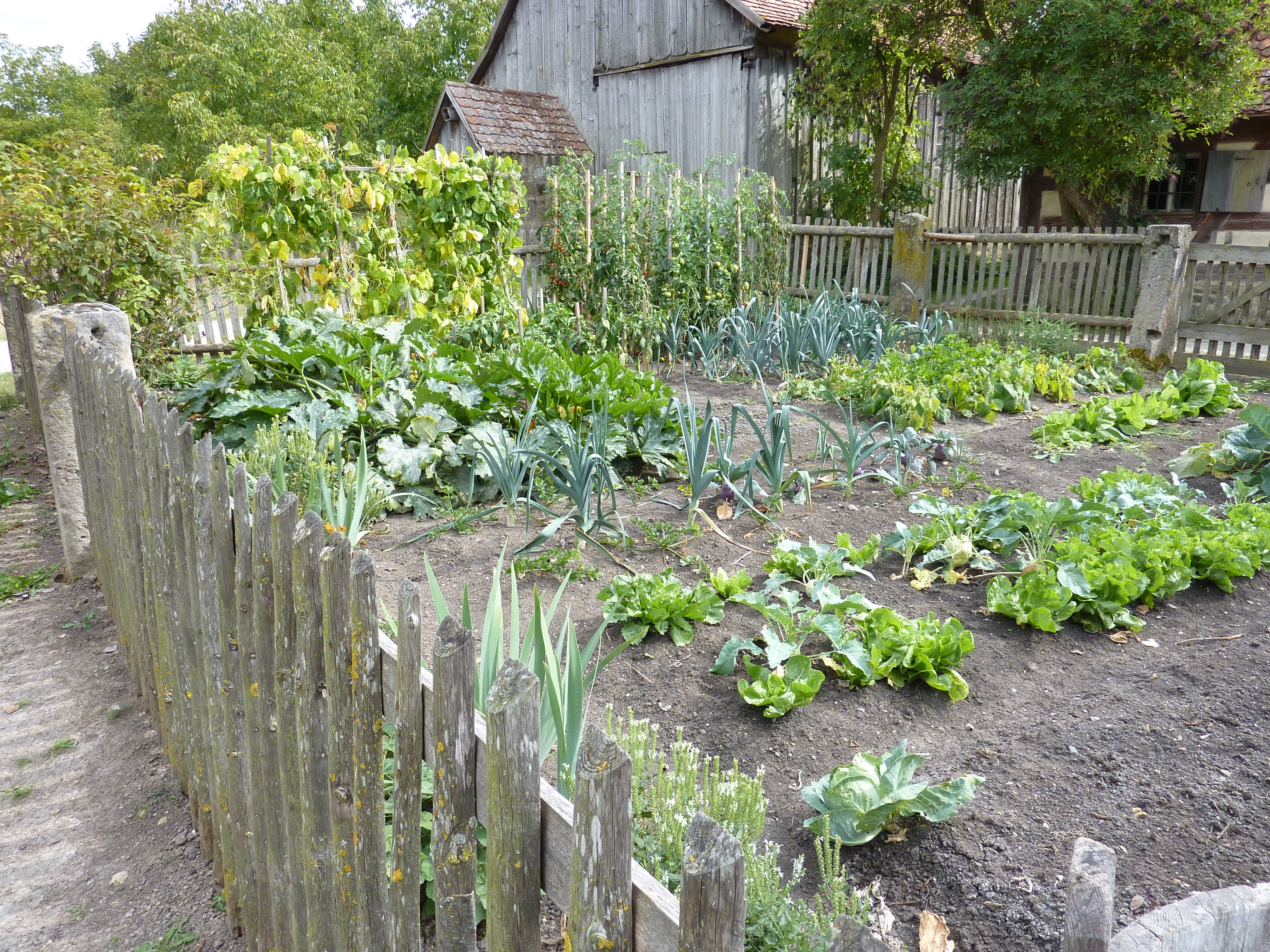 Vegetable garden planning for beginners great resource