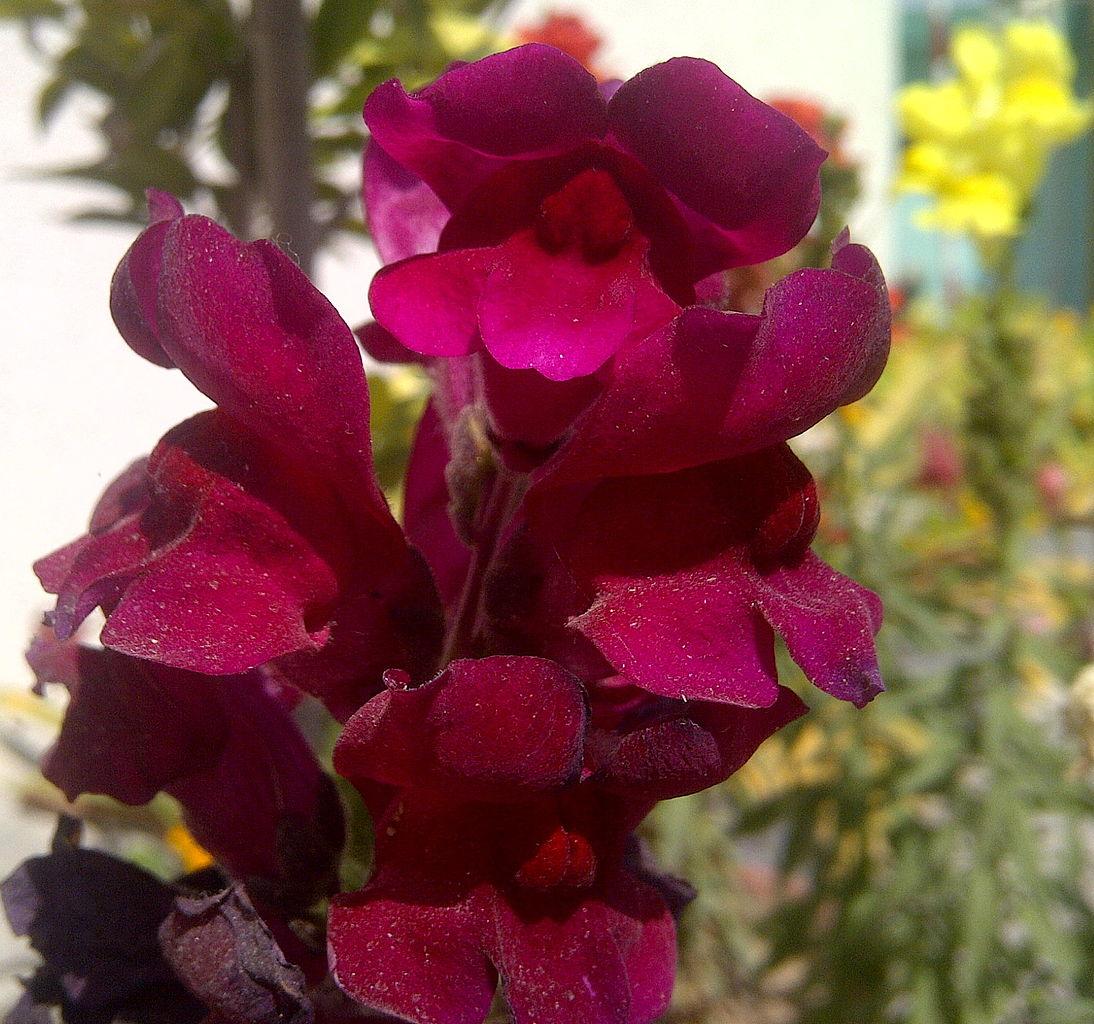 Flowers: Auntie Dogma's Garden Spot