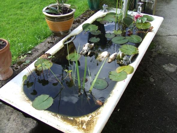 Bath_Tub_Fish_Pond_(2834517628)