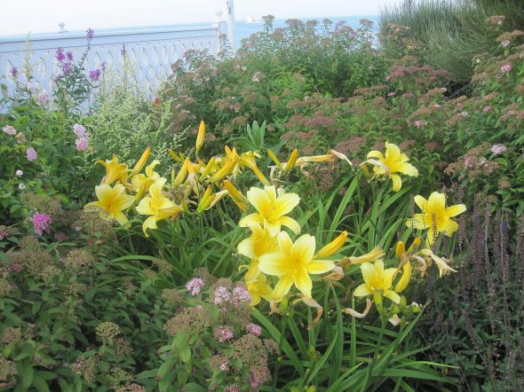 1280px-Lilies_at_Block_Island_IMG_1052