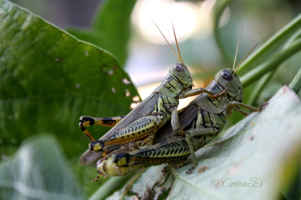 grasshopperjiggy