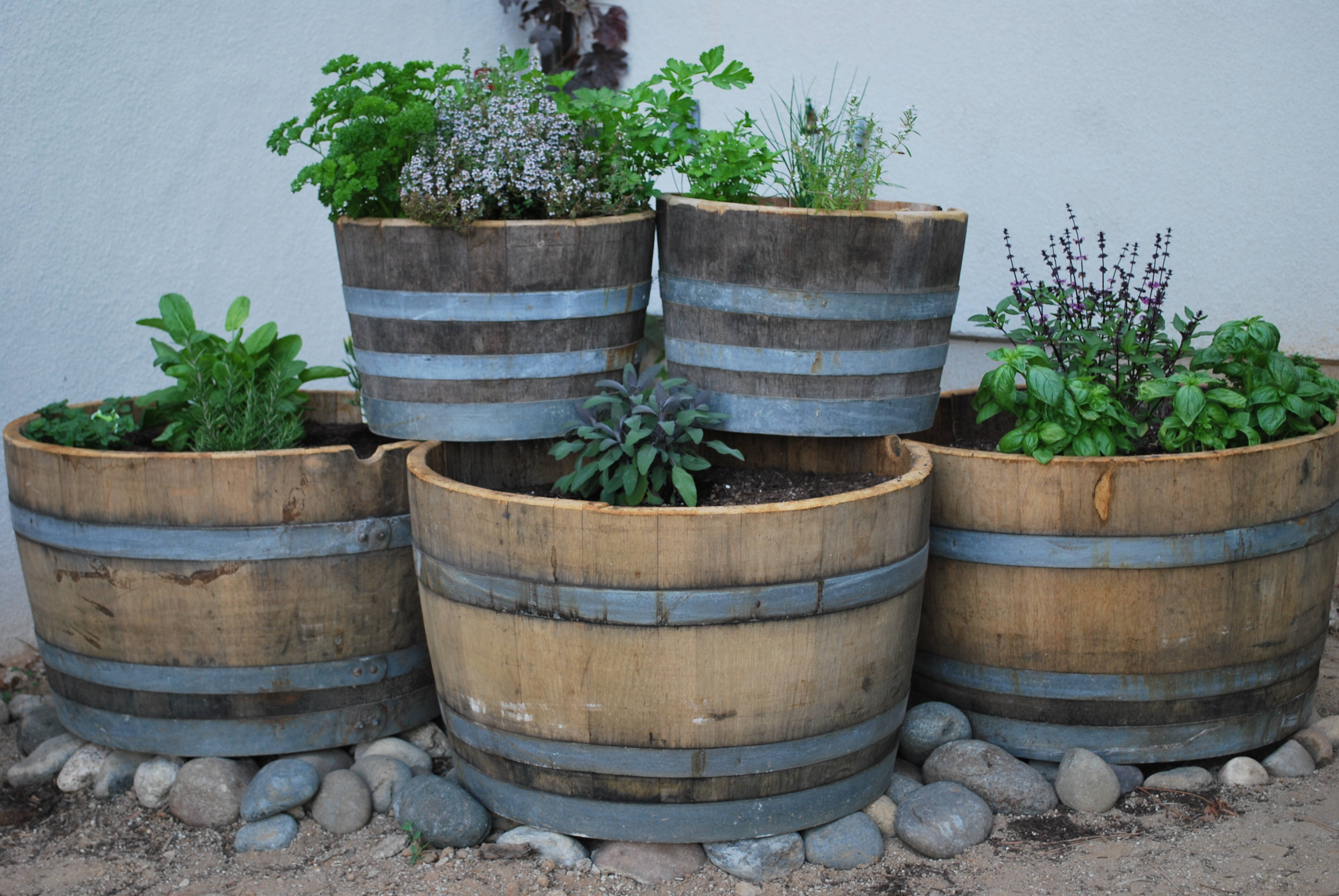 Have a Lawn and Eat Too The Edible Backyard Barrel Garden