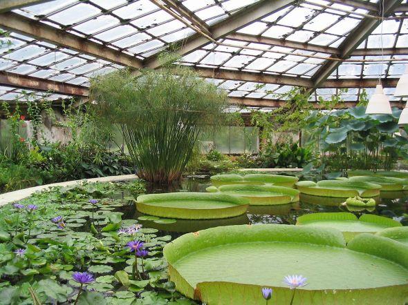 1280px-Botanical_Garden_V.L._Komarov_Botanical_Institute