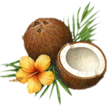 Coconutandflower
