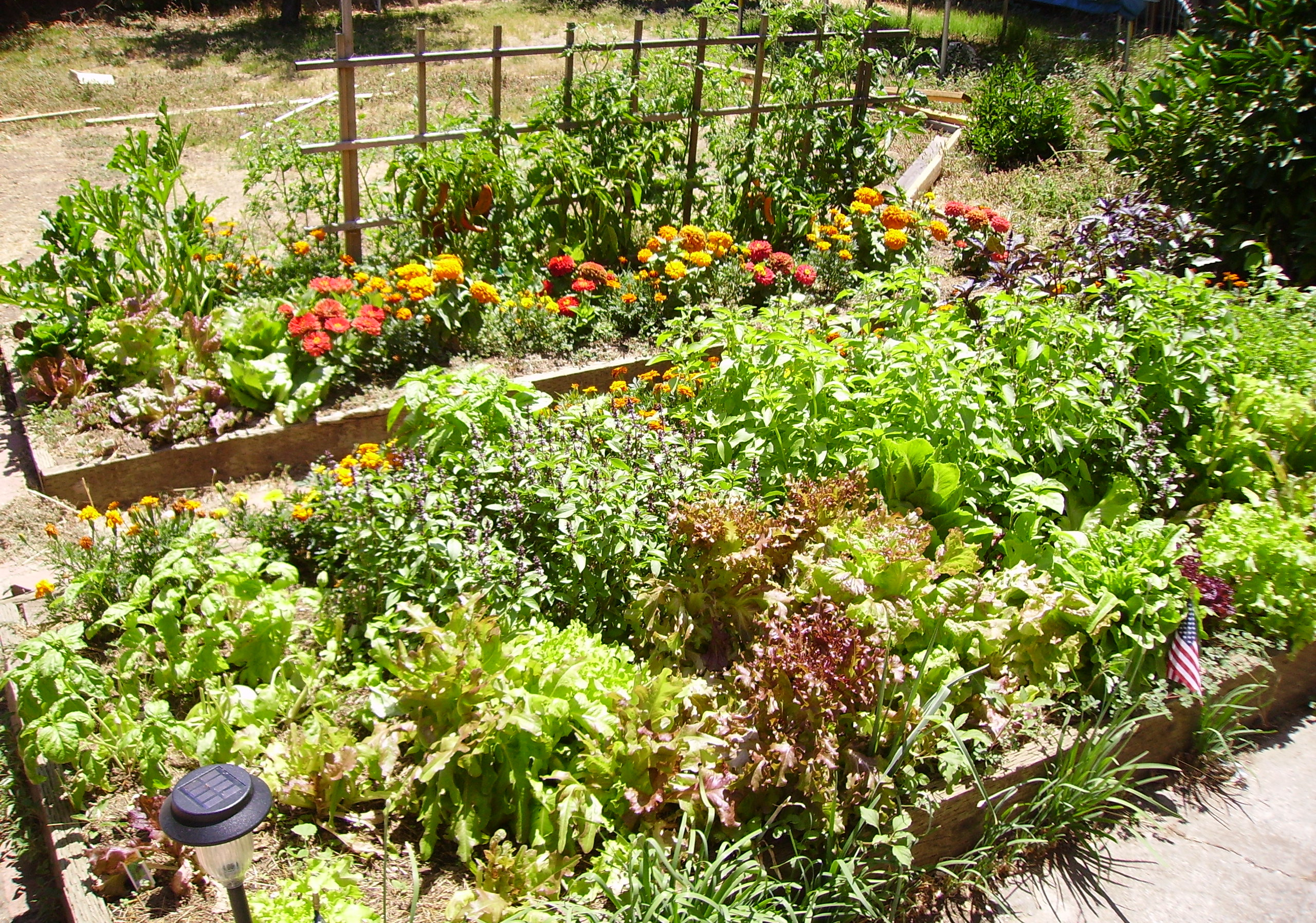 cheap raised bed ideas | Auntie Dogma's Garden Spot