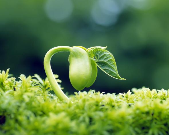 3Sprout-leaves-fresh-HD-Desktop-Wallpapers-1280x1024