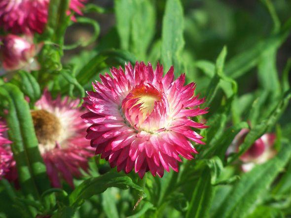 1280px-Flower_228